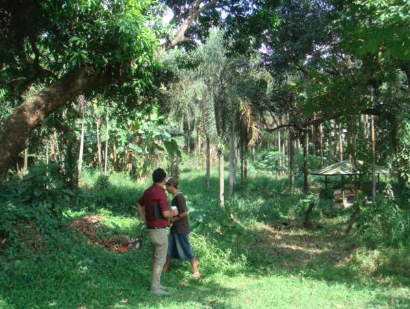 Isla palma jardin de miramar under construction for Jardin de miramar